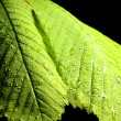 Green leaf with water drops — Stock Photo