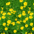Stock Photo: Sunny yellow flowers background