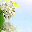 Green leaves and white flowers reflecting in the water — Stock Photo #7288837