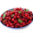 Cranberries — Stock Photo