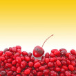 Stock Photo: Cranberries on white background