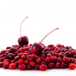 Cranberries on white background — Stock Photo