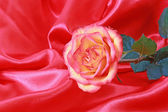 Pink rose on a red satin - studio shoot — Stock Photo