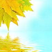 Yellow leaves — Stockfoto