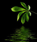 Green leaf with water reflection — Stock Photo