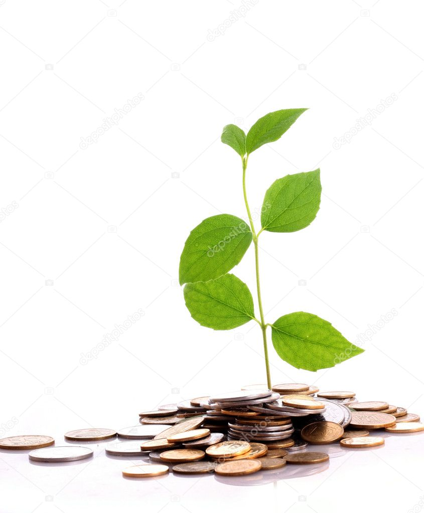 Coins and plant isolated on white background — Stock Photo #7286557