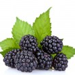 Beautiful blackberries — Stock Photo #7294642