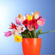Tulips in vase on blue background — Stock Photo