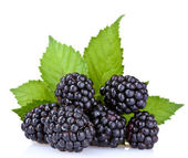 Beautiful blackberries — Stock Photo