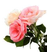 Three beautiful roses isolated on white — Stock Photo