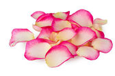Pink rose petals isolated on white — Stock Photo