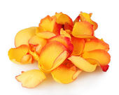 Yellow rose petals isolated on white — Stock Photo