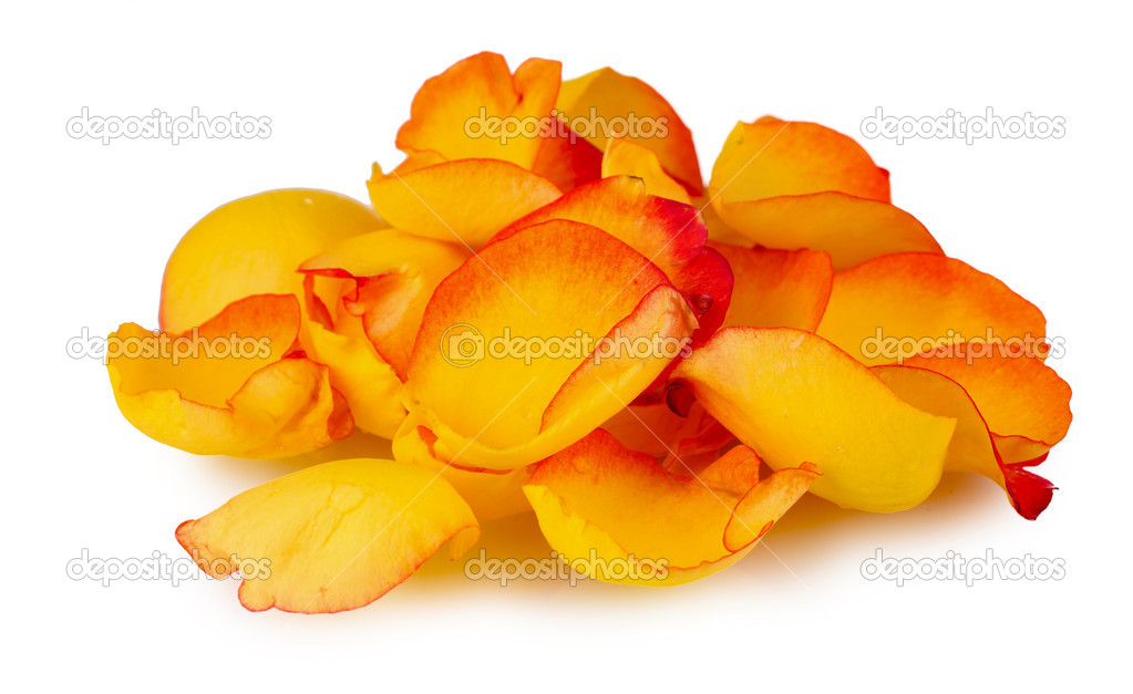 Yellow rose petals isolated on white — Stock Photo #7295256