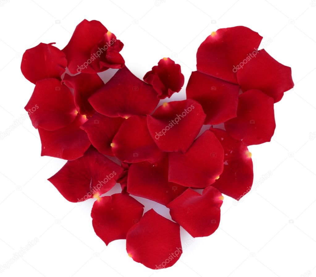 Red rose petals isolated on white — Stock Photo #7295258