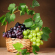 Grape & wine — Stock Photo #7683210