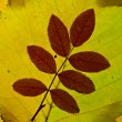 Autumn leaves lightened from backround — Stock Photo