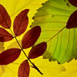 Autumn leaves lightened from backround — Stock Photo #6836343