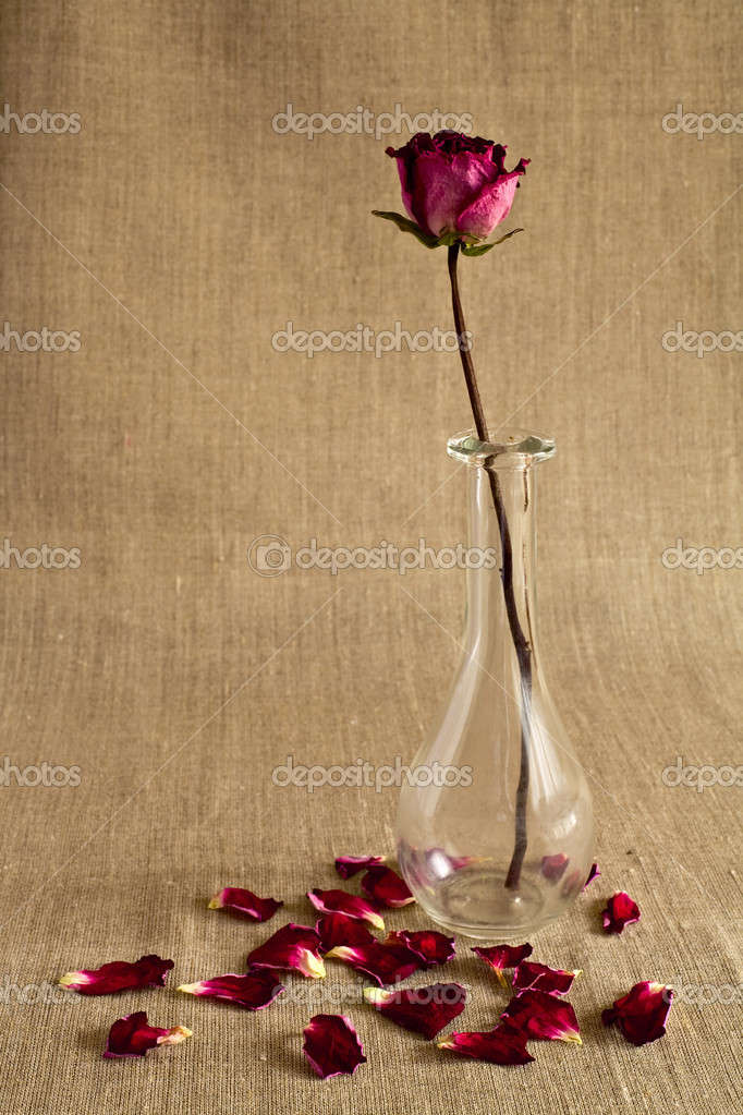 Dry rose in a glass vase with dropped petals over canvas background  Stock Photo #6835301