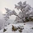 Stock Photo: Snow-covered tree on a rock