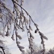 Rime on twigs against sky — Stock Photo