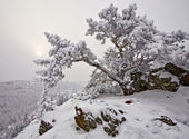 Snow-covered tree on a rock — Stock Photo