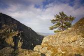 Pine on rock — Stock Photo