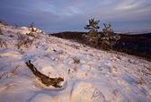 Pedra e par de árvores na iluminação do sol — Foto Stock