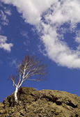 Tree on rock striving for sky — Stock Photo