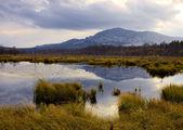 Marsh and mountain — Stock Photo