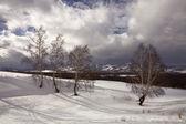 Ağaçlar karla kaplı bir tepe üzerinde — Stok fotoğraf