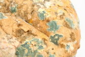 Mould growing on old bread — Stock Photo