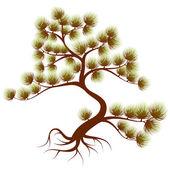 Tree cedar — Stock Vector