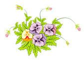 Bouquet of pansies — Stock Vector