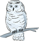 Owl sits on the branch — Stock Vector