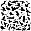 Collection of bird — Stock Vector