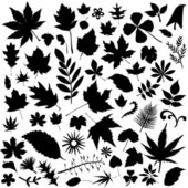 Set of leaf — Stock Vector