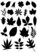 Set of leaf — Stock Vector