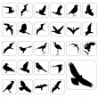 Stock Vector: Big set of birds