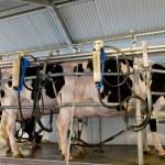 Milk plant — Stock Photo