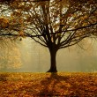 Stockfoto: Autumn