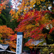Japanese Autumn — Stock Photo #7663564