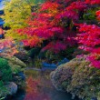 Japanese Autumn — Stock Photo #7663847