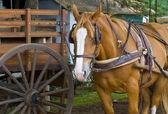 Häst i uruguay — Stockfoto