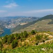 Royalty-Free Stock Photo: Rio Douro - Vineyards (2)
