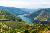 Rio Douro - Vineyards (1) — Stock Photo