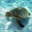 Stock Photo: Turtle and coral reef