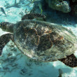 Turtle and coral reef - Stockfoto