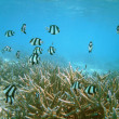 Undersea life on coral — Stock Photo