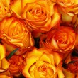 Orange roses - Stock Photo