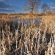 Frozen lake and reed - Stock Photo